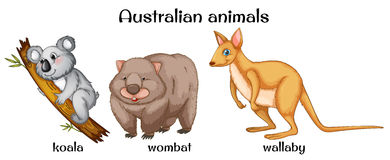 Australian animals Stock Photo