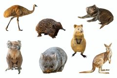Australian animals isolated. Collage of Australian animals, isolated on white background. The Emu, Echidna, Tasmanian Devil, Wombat, Kangaroo, Quokka and the Stock Images