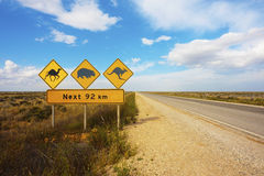 Australian Animals Road Sign. A wildlife warning road sign in the Nullarbor Plain, Australia royalty free stock images