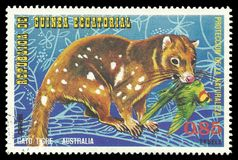 Australian Animals, Spotted tailed Quoll. Guinea Equatorial - stamp printed 1974, Multicolor Edition of offset printing with Topic Fauna and Mammals, Wildlife stock image