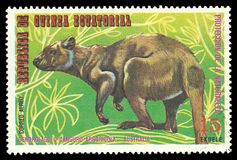 Australian Animals, Tammar Wallaby. Guinea Equatorial - stamp printed 1974, Multicolor Edition of offset printing with Topic Fauna and Mammals, Wildlife, Series royalty free stock photo
