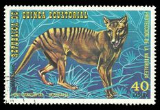 Australian Animals, Tasmanian Tiger. Guinea Equatorial - stamp printed 1974, Multicolor Edition of offset printing with Topic Fauna and Mammals, Wildlife, Series royalty free stock image