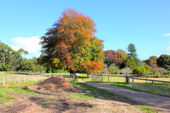 Australian autumn landscape Royalty Free Stock Photo