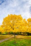Australian autumn in Mount Lofty, Adelaide Hills. Colourful autumn in Mount Lofty, Adelaide Hills, South Australia stock photos