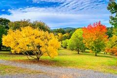 Australian autumn in Mount Lofty, Adelaide Hills. Colourful autumn in Mount Lofty on a day, Adelaide Hills, South Australia stock photography