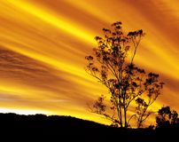 Australian autumn sunset with gum tree silhouette Stock Images