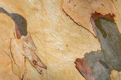 Australian Bark Abstract Royalty Free Stock Photography