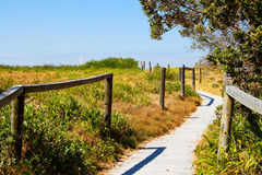 Australian Beach with grassy sand dune and walkway to sea stock photography