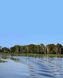 Australian billabong background Stock Photos