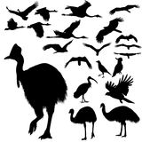 Australian birds silhouettes Royalty Free Stock Image