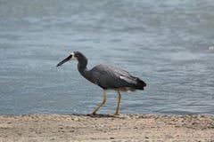 Australian birds Royalty Free Stock Photography