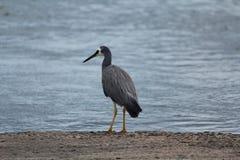 Australian birds Royalty Free Stock Images