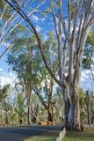 Australian Bush. Australian country road bush setting Stock Photo