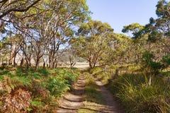 Australian bush. Dirt road through the Australian bush, Tasmania royalty free stock photos