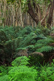 Australian bush Stock Images