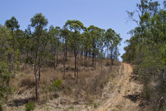 Australian bush Royalty Free Stock Image