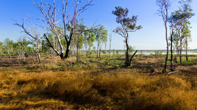 Australian Bush landscape Stock Photography