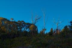 Australian Bush Landscape With Native Shrubs and Eucalyptus Tree royalty free stock photos