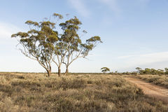 Australian Bush Landscape Stock Photo