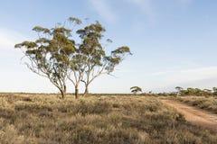 Australian Bush Landscape stock photo