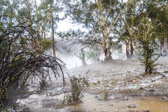 Australian bush in mist after storm Royalty Free Stock Photography