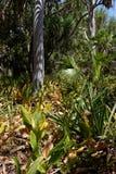 Australian bush in Northern Territory 02 stock photo