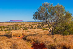 Australian bush (outback) Stock Photography