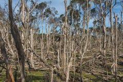 Australian Bush. The Australian outback where the wildlife stays Stock Image