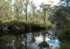 Australian bush reflected in a billabong. Trees surrounding a billabong in the Australian bush. They are reflected in the water Royalty Free Stock Photo