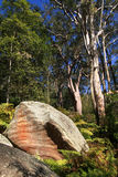Australian bush with rocks and eucalyptus trees. Stock Image