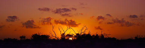 Australian Bush Sunset. Sunset in the Australian Bush Stock Photography