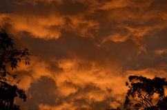 Australian Bush Sunset Stock Photography