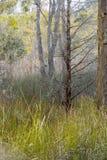 Australian bush Royalty Free Stock Images