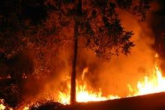 Australian bushfire. Red wildfire in Australia background royalty free stock photography