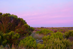 Australian bushland with purple sky. Vegetation with purple sky near Great Ocean Road, Australia Stock Photos