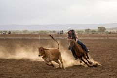 Australian Campdraft Competition Royalty Free Stock Photography