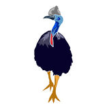 Australian Cassowary illustration design Stock Photo