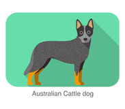 Australian Cattle dog, dog standing flat icon design Stock Image