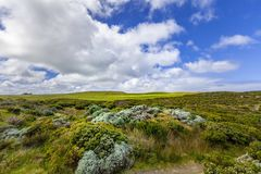 Australian coastal vegetation and white fluffy clouds in blue sk stock photos