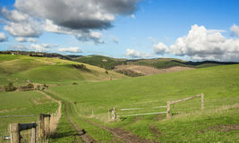Australian Country Landscape. Australian farm landscape with green rolling hills and a dirt country road Royalty Free Stock Photography