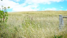 Australian country landscape close up with wildflowers. In the Barossa Valley, South Australia Stock Photography
