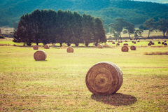 Australian countryside landscape Royalty Free Stock Images