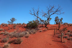 Australian desert Royalty Free Stock Photos