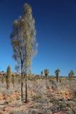 Australian desert Royalty Free Stock Image