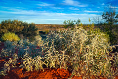 Australian desert (outback) Royalty Free Stock Photos