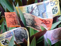 Australian dollars. Notes in the garden Royalty Free Stock Photo
