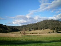 Australian farming landscape, with rolling hills and a vast blue sky. An Australian landscape, with gently rolling hills covered with trees. Cows with their Stock Image