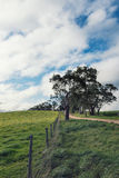 Australian farming scene with gum tree and fence Royalty Free Stock Image