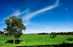 Australian Farmland Royalty Free Stock Photo
