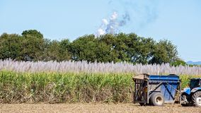 An Australian Field Of Sugar Cane Being Harvested stock photos
